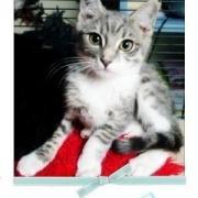 EPSON - M - Né le 20 juin 2009 - Adopté en septembre 2009