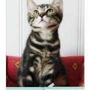 EDDY - M - Né le 20/04/2009 - Adopté en août 2009