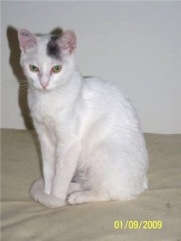 ELFIE - F - Née le 01/05/2009 - Adoptée le 15 septembre 2009