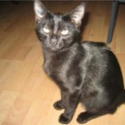 ERMIONE - F - Née le 15/04/2009 - Adoptée en décembre 2009