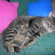 DJINGLE - M - Né en 2004 - Adopté le 03/09/2009 - FIV
