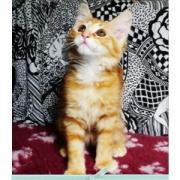 ENERGY - M - Né le 01/05/2009 - Adopté en août 2009
