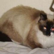 BABOU - F - Née en juillet 2006 - Adoptée en 2008