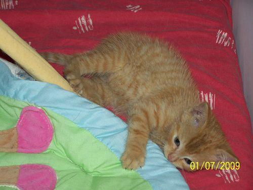 EVINRUDE - M - Né le 15 Mai 2009 - Adopté le 16 août 2009