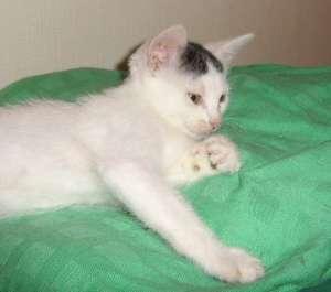 DIDOU - M - Né en avril 2008 - Adopté en 2008
