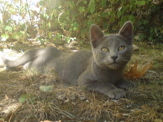 EDEN - M - Né 01/05/2009 - Adopté en juillet 2009
