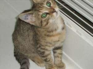 DJILA - F - Née en août 2008 - Adoptée en 2008