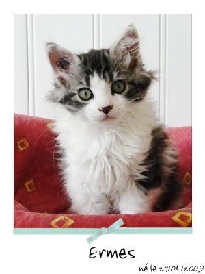 ERMES - M - Né le 21/04/2009 - Adopté en août 2009