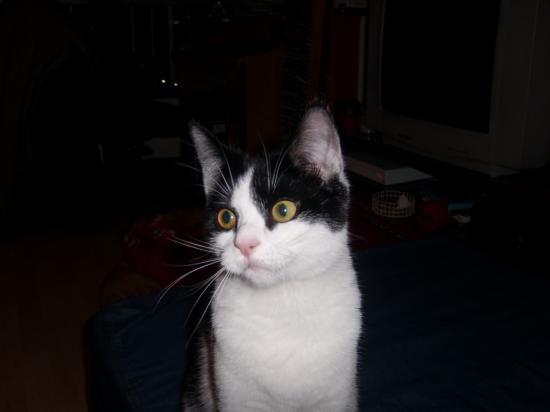 DIABLOTIN - M - Né le 01/06/2008 - Adopté en 2009
