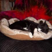 DIMITRI - M - Né le 01/06/2007 - Adopté en 2009