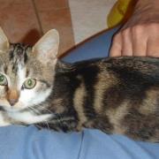EKON - M - Né le 01/05/09 - Adopté en décembre 2009