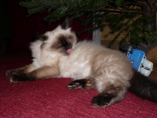 EVIE - F - Née le 15/08/2009 - Adoptée le 10/12/2009