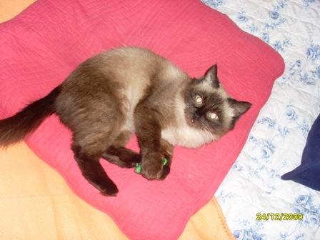 ELYNN - F - Née en 2008 - FIV - Adoptée le 07/02/2010