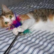 ETNA - F - Née le 01/07/2009 - Adoptée en décembre 2009