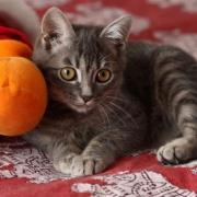 FALONE - M - Né le 15/07/2010 - Adopté en novembre 2010