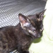 FEARLESS - F - Née le 12/08/2010 - Adoptée en octobre 2010.