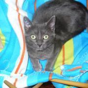 FIGHT - M - Né le 12/07/2010 - Adopté en Novembre 2010