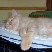 FLETCHER - M - Né le 05/04/2010 - Adopté en août 2010.