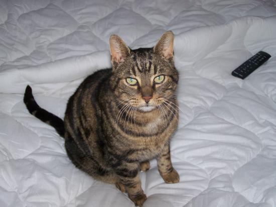 FREDDO - M - Né en 2003 - Adopté le 14/03/2010