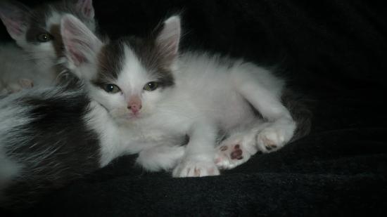 FANJI - M - Né le 17/08/2010 - Adopté en novembre 2010