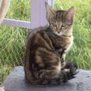 FANTAISY - F -  Née le 01/06/2010 - Adoptée en décembre 2010