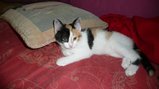 FAY - F - Née mi-mai 2010 - Adoptée en septembre 2010.