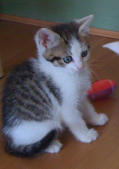FEBUS - M - Né le 01/04/2010 - Adopté en juin 2010.