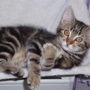 FELLINI - M - Né le 01/06/2010 - Adopté en septembre 2010.