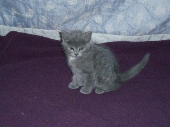 FENRIS - M - Né le 05/05/2010 - Adopté en septembre 2010.