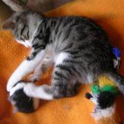 FLIK - F - Née vers le 25/02/2010 - Adoptée en juin 2010