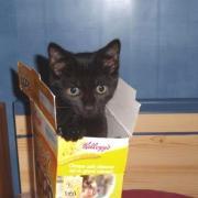 FLINT - M - Né le 01/05/2010 - Adopté en décembre 2010