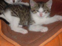 FLIPPER - M - Né le 01/05/2010 - Adopté le 09/08/2010.