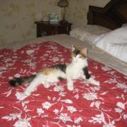 FLOREAL - F- Née en juillet 2010 - Adoptée en novembre 2010