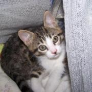 FLYBALL - M - Né le 12/04/2010 - Adopté en septembre 2010.