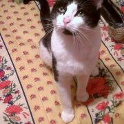 FOX - M - Né le 01/04/2009  - Adopté en juin 2010.