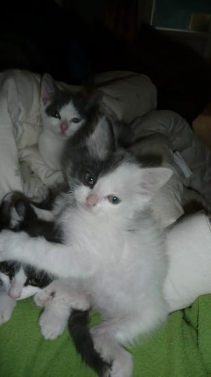 FUZAO - M - Né le 17/08/2010 - Adopté en octobre 2010.