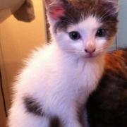 GARA - M - né le 10/04/2011 - Adopté en Aout 2011