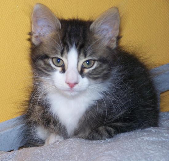 GIULLETTA  - F - Nee en Avril 2011 - Adoptée en Juillet 2011