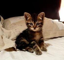 GRANY - F - née le 07/04/2011 - Adoptée en Juin 2011