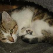 GRETA - F - Née en mai - Adoptée en Juillet 2011