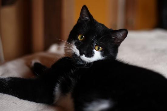 GRISBY - Né en juillet 2010 - Adopté en mars 2011