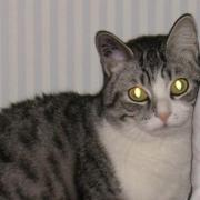GRISOU - M - Né en 2009 - Adopté en Février