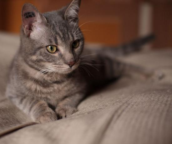 GULLY -Né en juillet 2010 - Adopté en mars 2011