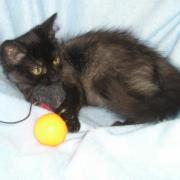 GABBANA - F - Née le 25/05/2011 - Adoptée en Septembre 2011