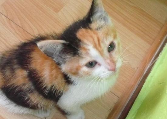 GINKO - F - Née en Avril 2011- Adoptée en Juin 2011