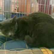 GIULIA - F - Née le 01/02/2011 - Adoptée en aout 2011
