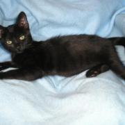 GLAMOUR - F - Née le 08/04/2011 - Adoptée en Septembre 2011