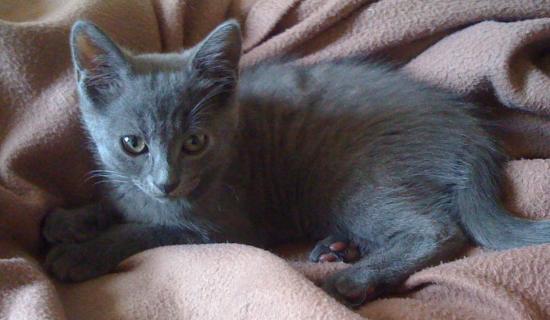 GLOBUL - M - Né le 10/05/2011 - Adopté en septembre 2011