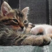 GOJI - M - Né en Avril 2010 - Adopte en Juin 2011