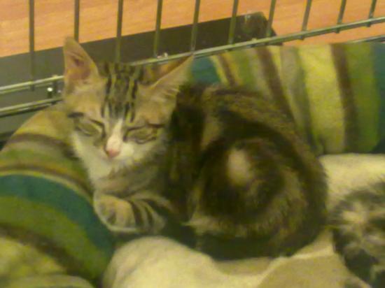 GRATOUILLE - M - Né le 10/05/2011 - Adopté en septembre 2011